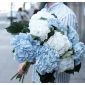 9 бело-голубых красоток