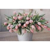 Тюльпаны (8)