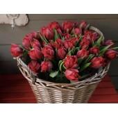 39 красных тюльпанов в корзине